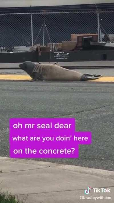 No seals were harmed