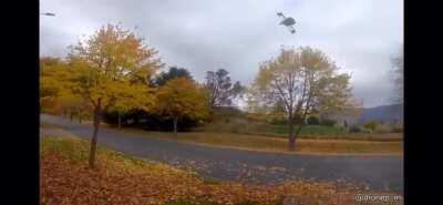 Drones scream too