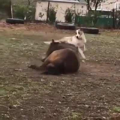 Интересная дружба