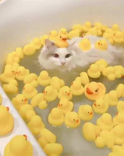 Rubber Ducks Everywhere