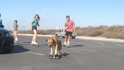 Skateboarding Dog and Company