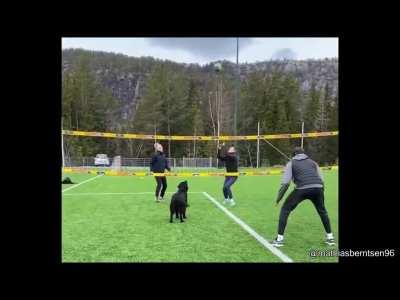 this dog plays volleyball with his owners!