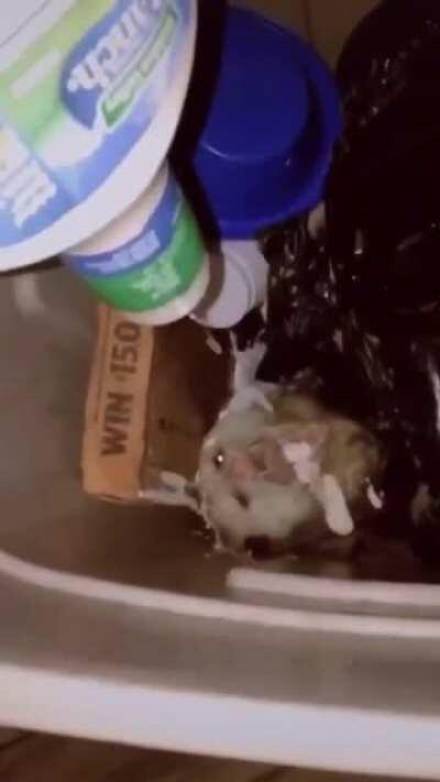 Feeding ranch to a critter in their garbage bin.