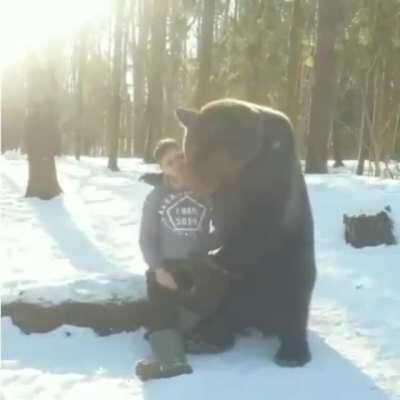 A friendly bear