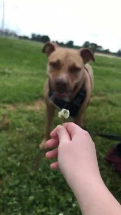 flower chomp