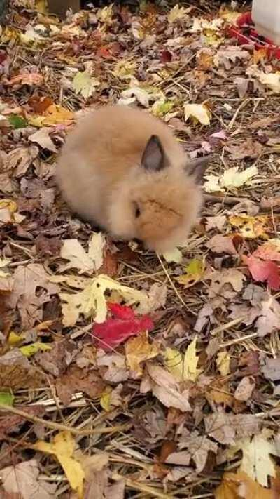 Little bunny at the pumpkin patch today.