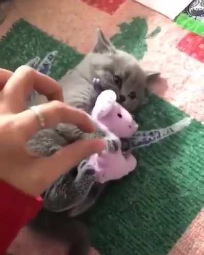 Don't Touch My Pinkie Toy