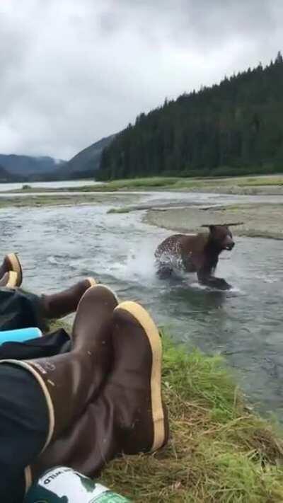 A bear running upstream, a little too close