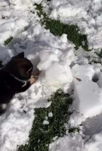 8 weeks old Shiba meets snow for the first time ❄️⛄️💜