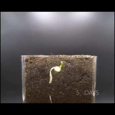 Plant life is intelligent. Change my mind.