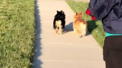My boys on a walk