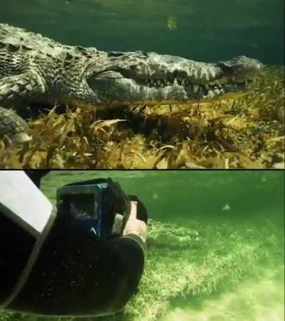 The wildlife filmmaker Russell MacLaughlin does a close encounter with this crocodile and keeping it well in frame