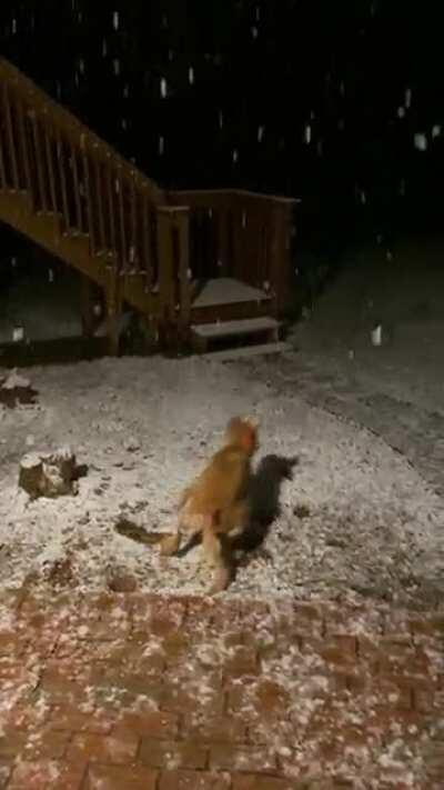 My little man trying to eat the flakes and zooming during his first snowfall.