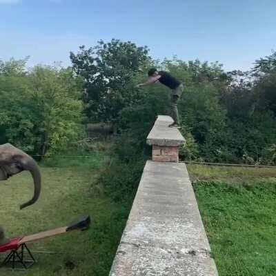 Elephant unstuck from seesaw thanks to a front flip