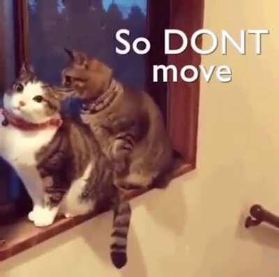 Don't move you..