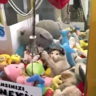 That little gremlin that is definitely hiding in the claw machine pulling down on all the plushies so I can't get them