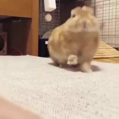 A bunny stretch and yawn. I cannot handle this