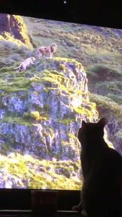 My cat was loving the live action Lion King