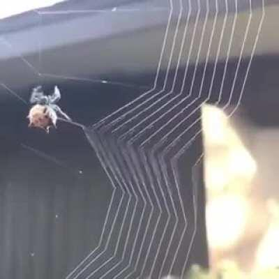 Spider weaving a web.
