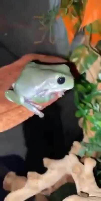 Dont mess with the frog