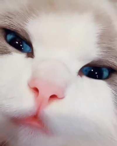 Perfect blue eyes