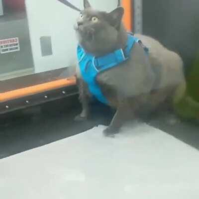 Cinderblock's first time on the treadmill trying to lose weight