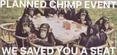 Have all the apes arrived?