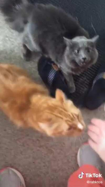 Petting another cat