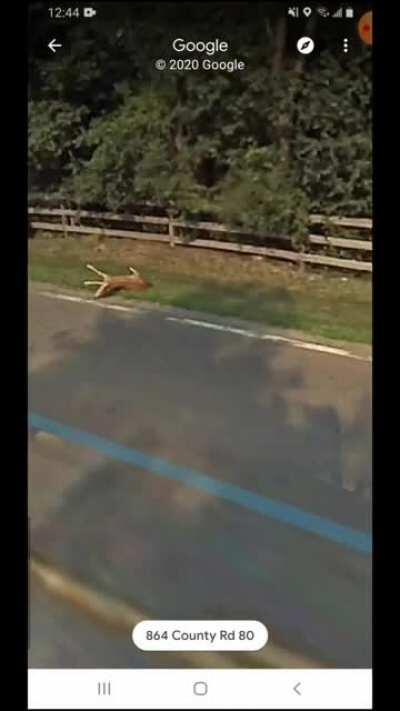 Google car hit bambi