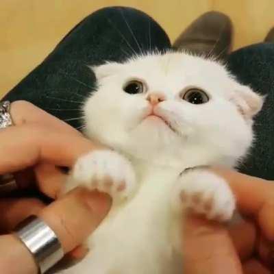 kittengifs