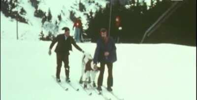 A calf learning how to ski (Switzerland, 1974)