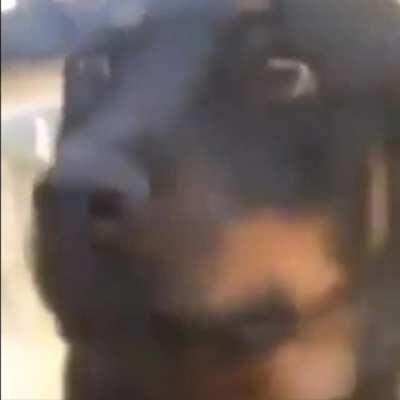 exPOZEd dog ;(