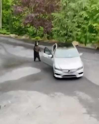 The bear tries to go on a ride.