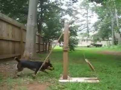 Dog operated catapult