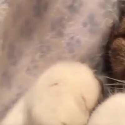 I've never seen a kitten suck on the pads of her feet! Adorable!