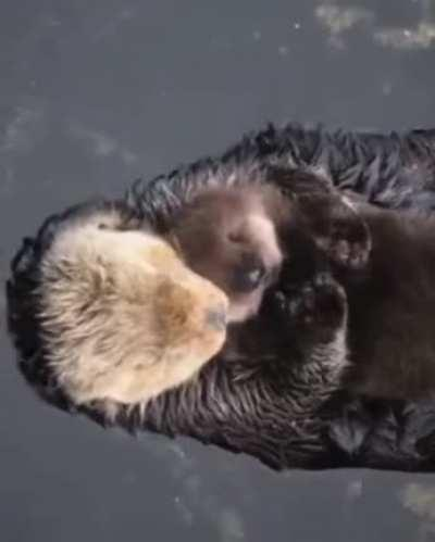 Float, cuddle, and love!