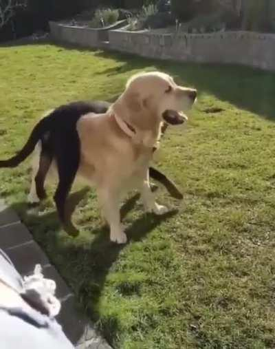 Doggo-round