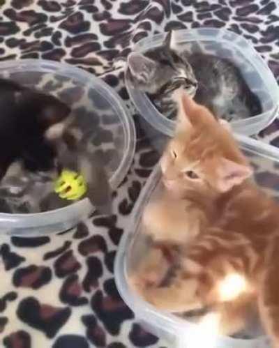 3 little kittens on a tab