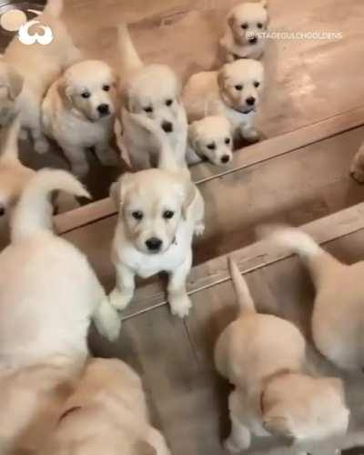 Forget about politics look at Puppies instead