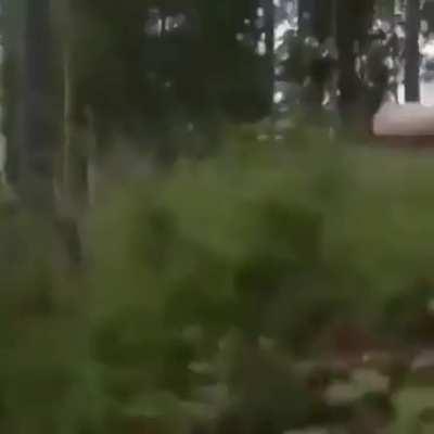 It went around a tree