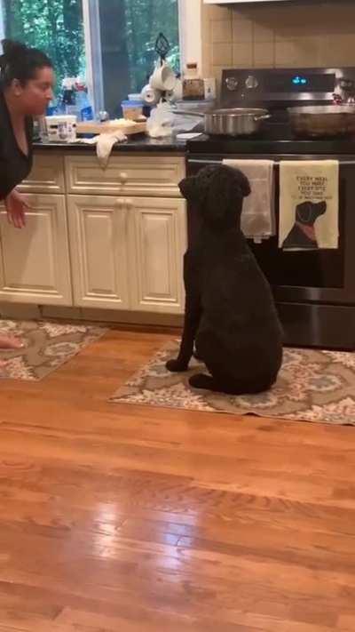 Good dog do trick