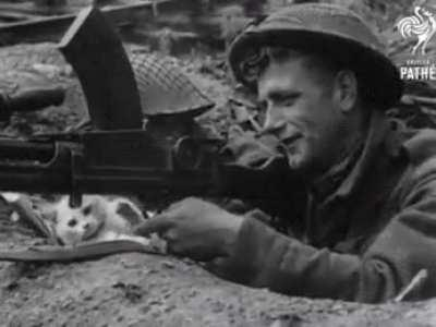Cat pays a visit to a soldiers foxhole.