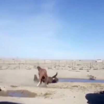 Horse choke slam