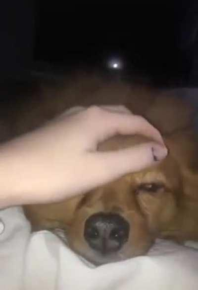 Dog need scritches
