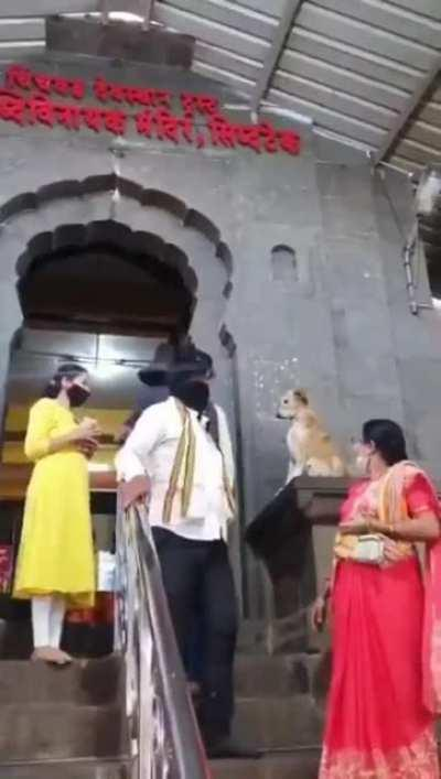 Doggo hi-fives humans outside the temple in India