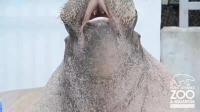 E.T yells