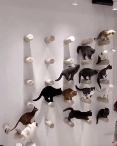 A Clowder Of Cats !