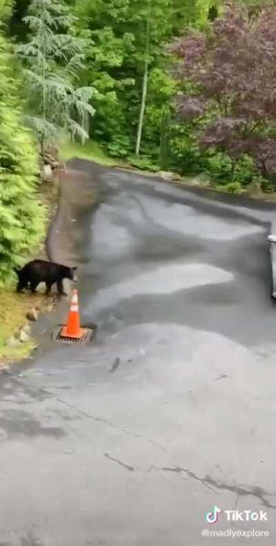 Bear going home
