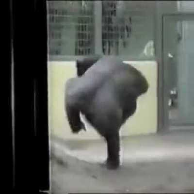 Goriler