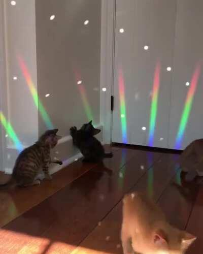 Caturday Night Fever